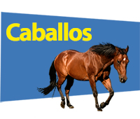 caballos-banner